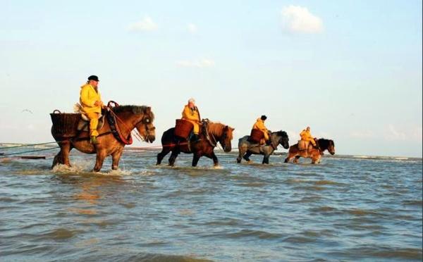 Belgique : Coxyde célèbre ses pêcheurs de crevette à cheval...