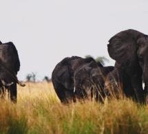 L'Afrique Australe avec Assurever : un voyage plein d'émotions