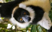 Madagascar part en tournée à Paris, Marseille, Lyon et Nantes