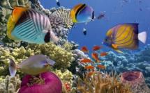 FTI Voyages programme Sharm-El-Sheikh pour l'hiver 2019-2020