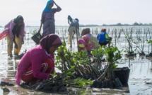 Replantation des mangroves avec l'association Yagasu, en Indonésie - Photo DR