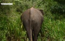 Voyages Vert Vous - Épisode 5 : Sri Lanka, territoire des éléphants