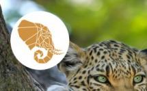 SATravellers, Réceptif Afrique du sud