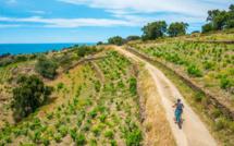 Caractérisée par ses sentiers calmes au dénivelé faible, la Vélittorale permet aussi de rejoindre les criques naturelles situées entre la plage du Racou et le village voisin de Collioure. /crédit DR