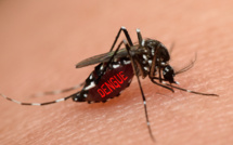 Les maladies virales transmises par les moustiques Aedes – comme la dengue, le Zika, le chikungunya et la fièvre jaune – sont elles aussi concernées /crédit DepositPhoto