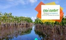 © Office de Tourisme des Savanes / Le Pripri de Yiyi à la Maison de la Nature de Sinnamary