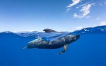 Tenerife, la plus grande îles des Canaries, vient d'obtenir la certification « Responsible Watching », un pas de plus marquant l'engagement des Canaries en faveur du tourisme responsable - DR