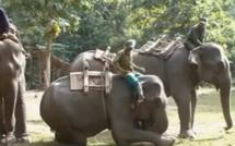 Sous couvert d'éthique, la mort programmée des éléphants du Laos