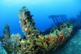 Surprise de plongée aux Iles Vierges Britanniques